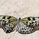 Paper kite butterfly in  the sand by jozi1