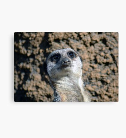 Amusing Meerkat Canvas Print