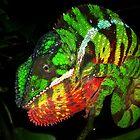 Chameleons by Robbie Labanowski