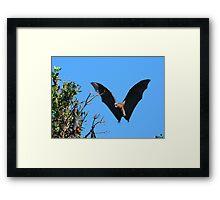 Grey-headed Flying Fox Framed Print
