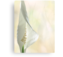 Peace Lily 1/2 Canvas Print
