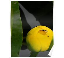 Peeping Fly and Yellow Lily Poster
