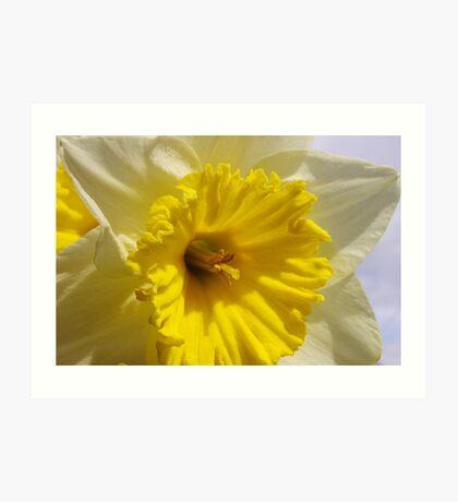 delightful daffodil close up  Art Print