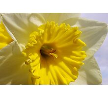 delightful daffodil close up  Photographic Print