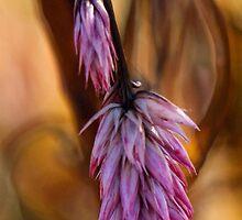 Fall Ornamental Grass by T.J. Martin