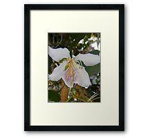Purple Orchid Tree Framed Print