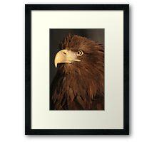 Proud Plumage Framed Print