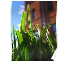 Giant Grass!! Poster