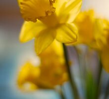 Dreaming of Spring by Roxanne Persson