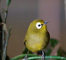 Little Bitty,Teenie Weenie, Little Birdie from Zan-Beanie. by tigerwings