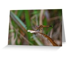 Yellow-black dragonfly Greeting Card