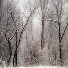 March Snow by Mary Ann Reilly