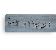 A family of Stilts Canvas Print