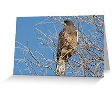 Swainson's Hawk ~ Migratory  Greeting Card