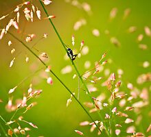 Ant dreams by Dinni H