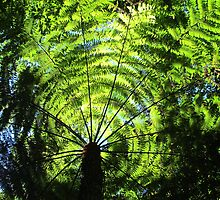 Light Through the Fronds by Michael John