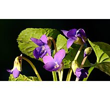 Sweet Violet! Photographic Print
