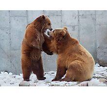 Bears Playtime Photographic Print