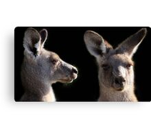Kangaroo Profile Canvas Print