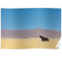 Wild horses of the tiras mountains I Poster