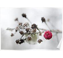 Frozen Raspberry Poster