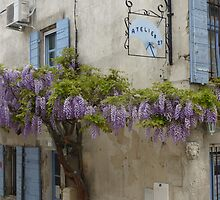 Flowering wisteria St Remy Provence by Susan Moss