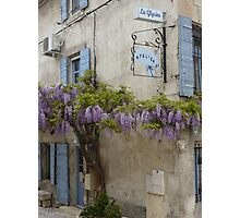 Flowering wisteria St Remy Provence Photographic Print