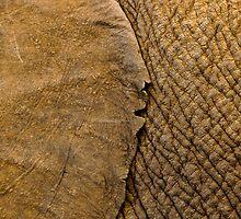 Elephants skin by Andy-Kim Möller