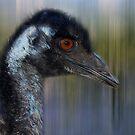 Emu by Eve Parry