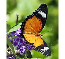 Another pretty butterfly! Photographic Print