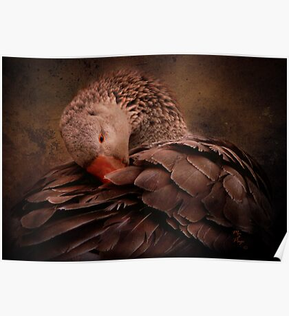 Chocolate Goose Poster