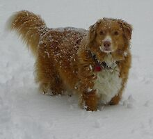 Dixie in the Snow by MaryinMaine