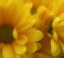 Buttery Soft by Rachel Sonnenschein