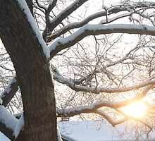 Winter Sunrise by DavePlatt