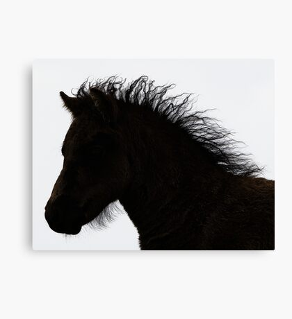 Shetland pony foal silhouette B/W Canvas Print