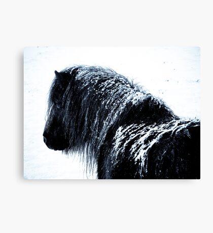 Shetland pony in the snow Canvas Print