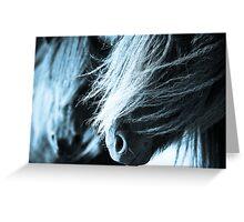 Shetland pony mares Greeting Card