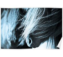 Shetland pony mares Poster