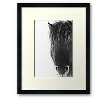 Shetland pony with ice Framed Print