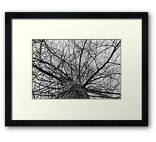 Gazing through a web of branches Framed Print