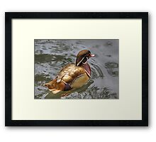 A Duck Of A Different Colour Framed Print