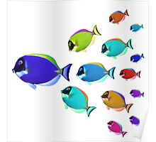 School of colorful fish  Poster