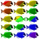 Gay fishes by Bruno Beach