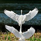 Egret(s) Built for Two by Joe Jennelle