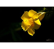Yellow Trumpet Photographic Print