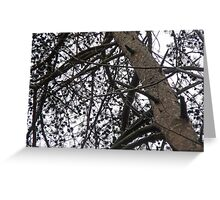New Jersey Pines Greeting Card
