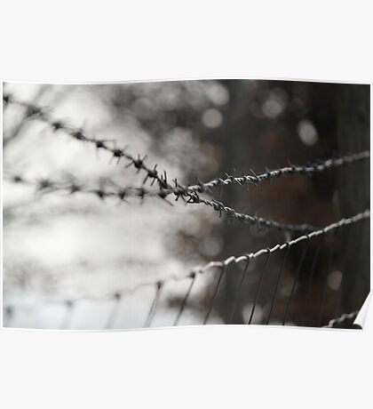barb wire & stock fence Poster