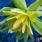 Spring Daff by Pixie-Atelier
