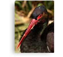 Black Stork Portrait Canvas Print
