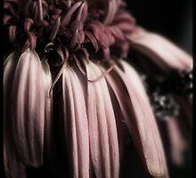~ephemeral~ by Cordelia